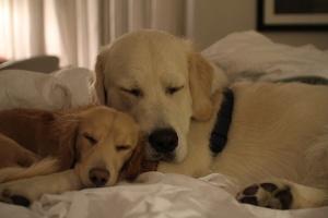Lenny und Tristan schlafen im Hotel (c) Luca Pisaroni