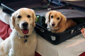 Tristan im Koffer, Lenny ist zufrieden (c) Luca Pisaroni